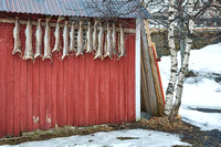 Fish Drying, Henningsvaer